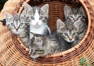 Propreté chaton et chat