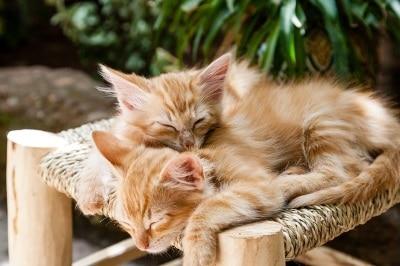 Chatons, chat et propreté