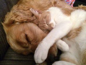 Chien et chat 3