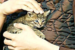 Chien et chat 4