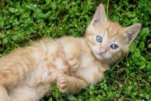Chien et chat 6