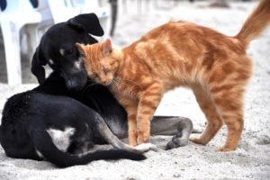 Chien et Chat Parasites 2