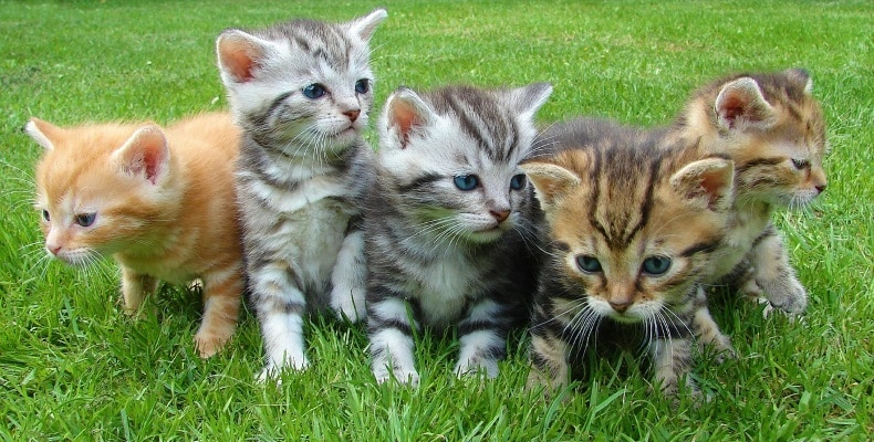 Éduquer chat et chatons