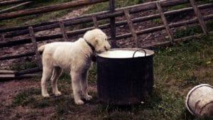 Alimentation chien et chat 1
