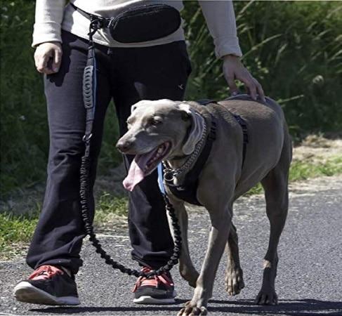 Meilleur harnais anti-traction CANICROSS pour chien TOP3