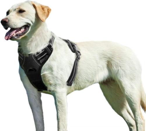 Meilleur harnais anti-traction EAGLOO pour chien TOP3