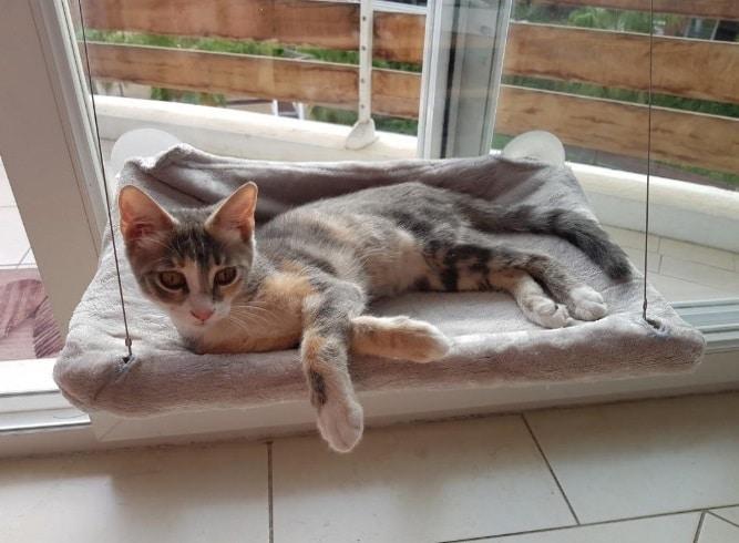 Hamac pour chat fixation fenêtre ou vitre JZK