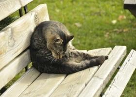Chat propreté léchage toilette seul, hygiène animal de compagnie, sans problème de malpropreté, éducation positive des animaux félins naturel
