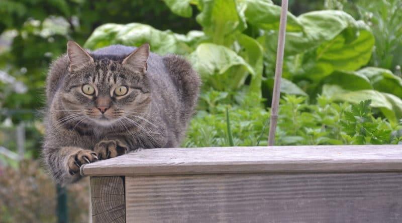 Chat stressé peur et anxiété