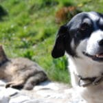 Chat et chien à l'extérieur risque tiques