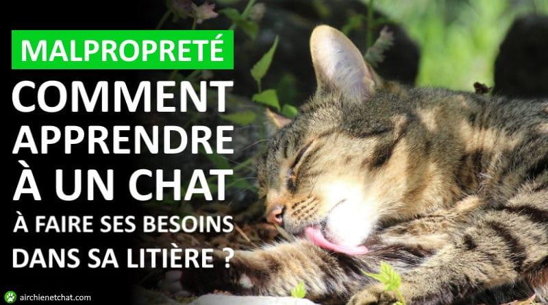 Comment apprendre à un chat à faire ses besoins dans sa litière, problème de malpropreté animal de compagnie, solution chaton stressé ou chat errant