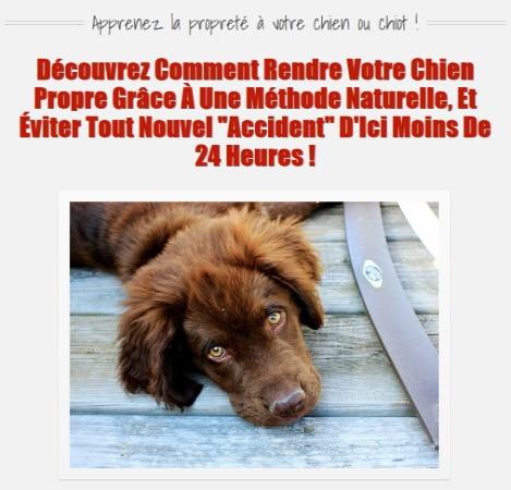 Ebook pour dresser son chiot ou chien APPRENDRE LA PROPRETÉ top 4