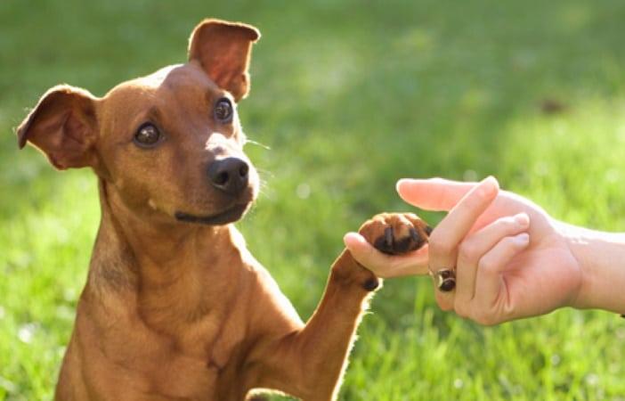 Ebook pour dresser son chiot ou chien GRÂCE AUX TECHNIQUES DE PRO top 4