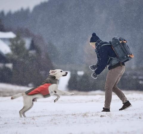 Habit chien hiver pour sortie extérieure, lutter contre froid dehors, garder animal au chaud, et à l'abri de la pluie, car habillage imperméable