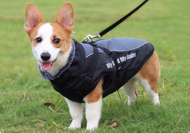 Habit chien petite taille, pour garder au chaud l'hiver pendant promenade extérieur, à l'abri du froid et contre la pluie pour ne pas se mouiller