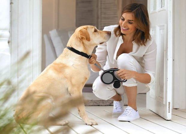 Doit on mettre la laisse à son chien ? Lieu public, législation, obligatoire ou pas, que dit la loi ? Chien de catégorie, et sanctions, risques, ou amendes