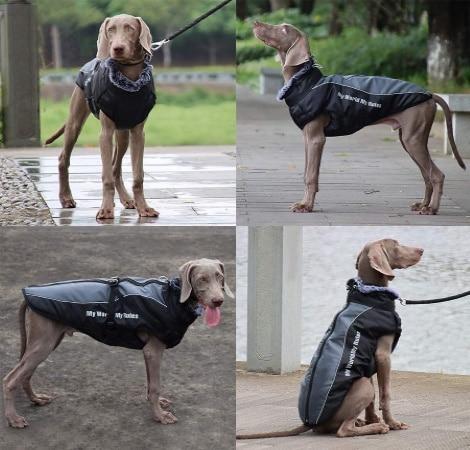 Manteau pour chien avec harnais de sécurité, veste réfléchissante pour animal de compagnie, taille moyenne de XL, XXL, 3XL, 4XL, 5XL, jusqu'à 6XL