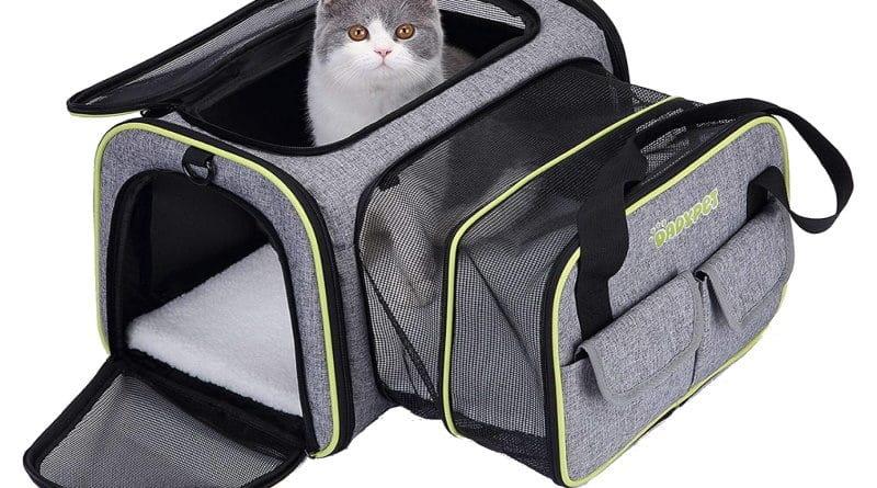 Meilleurs caisses de transport pour chat TOP 5