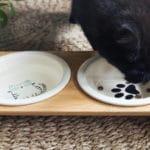 Meilleures gamelles pour chat anti-glouton, inox, céramique, design, bois, ou surélevée top6