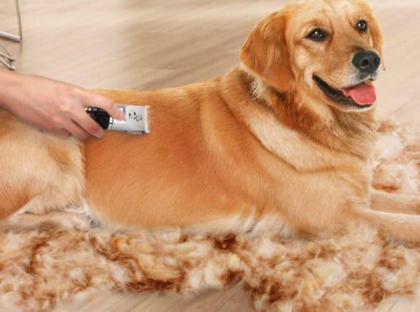 Meilleures tondeuses pour toilettage chien TOP 5