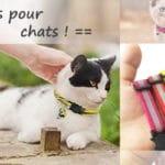 Colliers pour chats pas cher personnalisés ou gravés, avec dispositif de sécurité anti-étranglement, couleurs multiples, avec identifiant nom téléphone