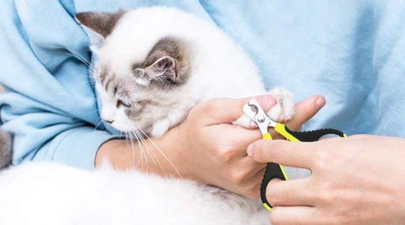 Meilleurs coupes griffes pour chat et chaton en acier inoxydable top3