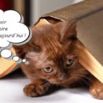 Les meilleurs livres sur le comportement des chats top5