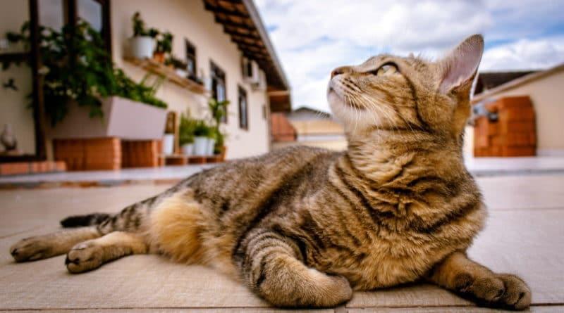 Meilleurs livres pour éduquer son chat ou son chaton TOP 3