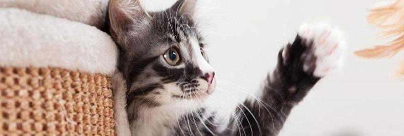 Meilleurs paniers pour chats TOP 3