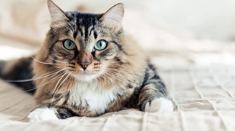 Meilleurs shampoing pour chat et chaton TOP 5